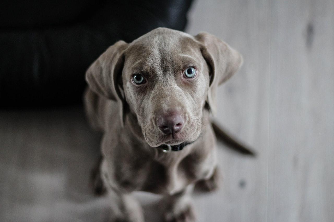 Comment soulager votre chien par des produits naturels ?